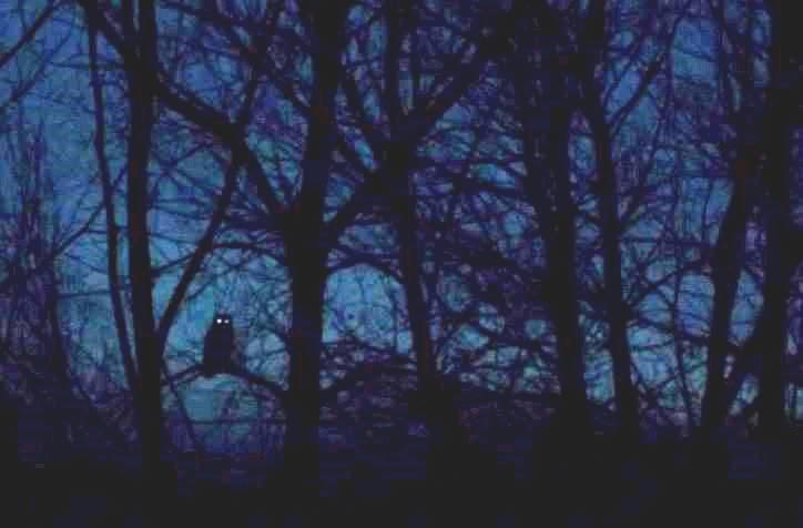Night Owl ce